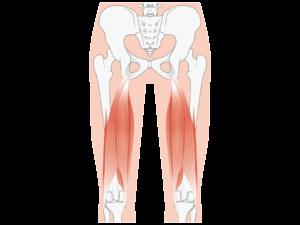 太くなりにくい足の筋肉:ハムストリングス